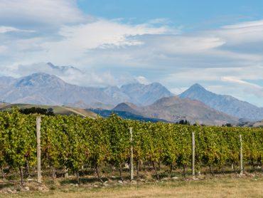 In Vino Veritas XLV: A New Zealand Nosh